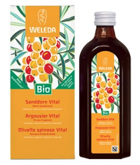 OLIVELLO SPINOSO VITAL SUCCO WE